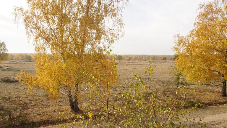 Die Heidelandschaft liegt westlich der Berliner Stadtgrenze und südlich der Bundestraße 5