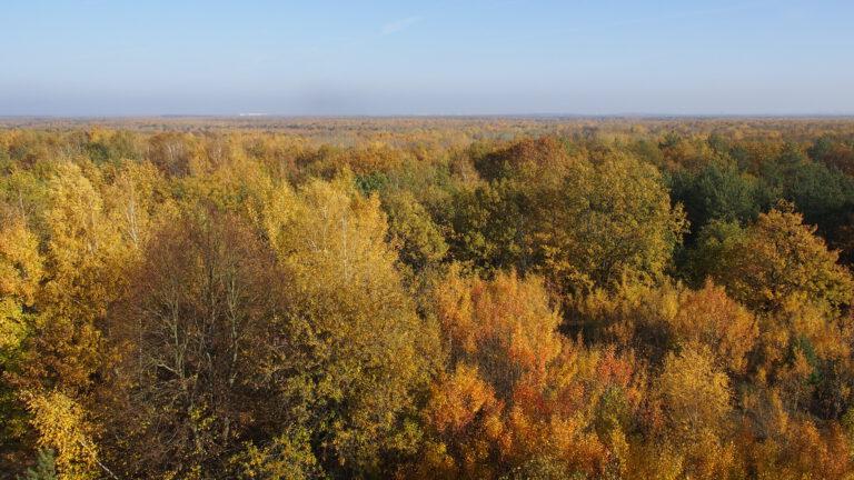 NaturlandschaftDöberitzer Heide vom Aussichtsturm am Finkenberg in 85 Meter Höhe
