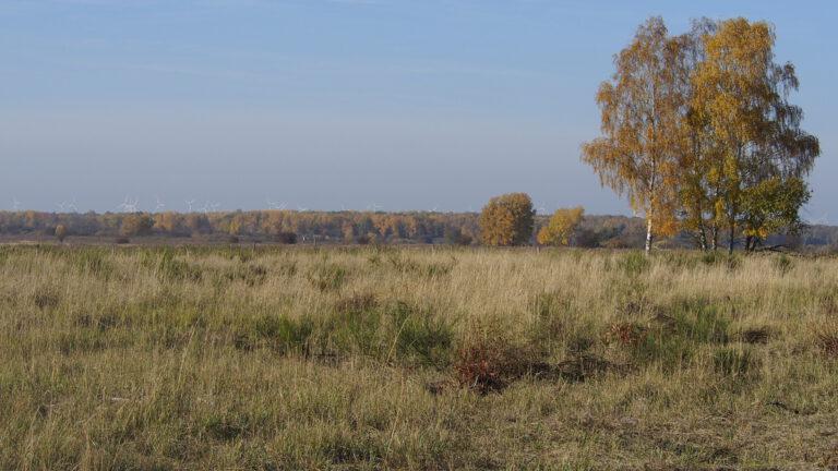 Die Döberitzer Heide ist zu großen Teilen als Naturschutzgebiet ausgewiesen und beherbergt ein Wildnisgroßprojekt der Heinz-Sielmann-Stiftung