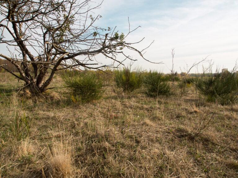 Wildnis entlang von ca. 55 kilometern Wanderwegen